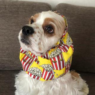 ポップコーン イエロー❤︎中型犬用スヌード 犬用スヌード(ペット服/アクセサリー)