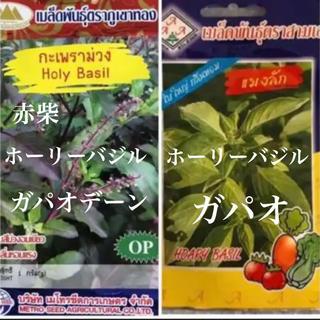 ホーリーバジル(ガパオ)と赤柴ホーリーバジル(ガパオデーン)(野菜)