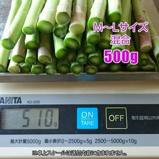 グリーンアスパラ 500g アスパラガス 新鮮野菜(野菜)