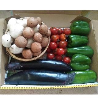 茨城産生マッシュルーム、九州産訳ありピーマン、なす、ミニトマト詰め合わせセット(野菜)