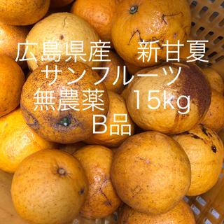 広島県産 新甘夏、サンフルーツ 無農薬 B品 15kgお入れして発送致します😋(フルーツ)