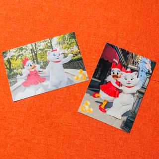 ディズニー(Disney)のTDS 2枚セット ビッグバンドビート スペシャルフォト(写真)