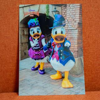 ディズニー(Disney)のTDL ハロウィン スプブ スペシャルフォト  ドナデジ(写真)