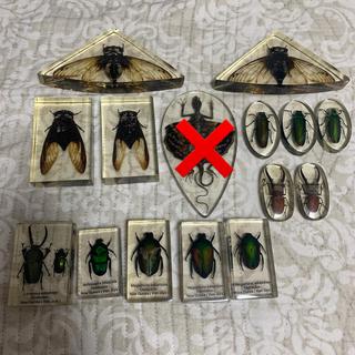 昆虫標本(1つ1000円)(虫類)