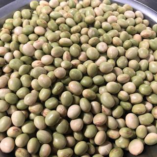 送料込み 令和元年産 山形県産 秘伝豆 青大豆 大粒 6キロ(豆腐/豆製品)