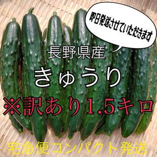 長野県産 キュウリ 宅急便コンパクト発送(野菜)