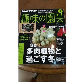 趣味の園芸 1月号(趣味/スポーツ)