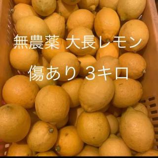 3キロ 大きめ 無農薬レモン 大崎下島 大長