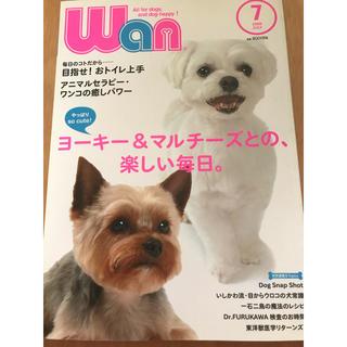 wan (ワン) 2008年 07月号(趣味/スポーツ)