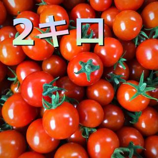 採れたて‼︎ ミニトマト♡2キロ