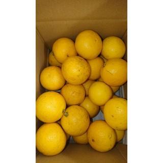●ぴゆあlovely様専用●温室小夏 2Sサイズ 約2kg 高知県産(フルーツ)