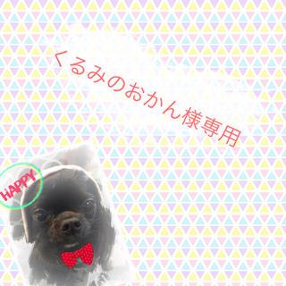 くるみのおかん様専用 ワンちゃん首輪【本革お名前付き】(リード/首輪)