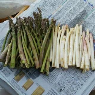 北海道産 ホワイトアスパラ グリーンアスパラ(野菜)