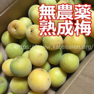 春秋さん専用■奈良県産 熟成梅 2kg (フルーツ)