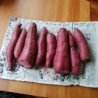 とみー様専用  さつまいも( 紫芋) 1.3k  訳あり(野菜)