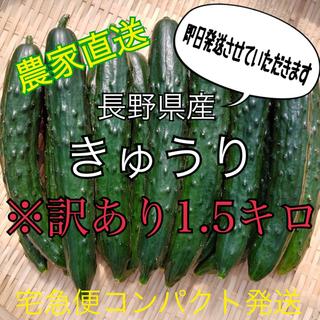 長野県産 訳あり胡瓜 宅急便コンパクト発送(野菜)