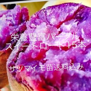 パープルスイートロード芋苗15本(野菜)
