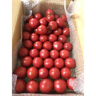完熟フルーツトマト約2kg入り