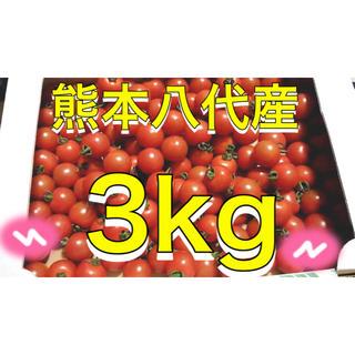 熊本八代産ミニトマト3kg