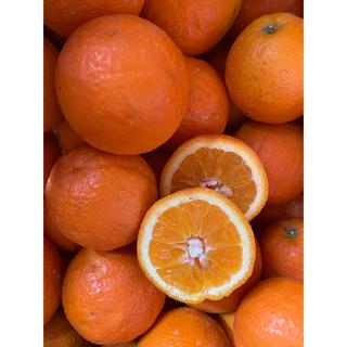 晩生オレンジ(フルーツ)