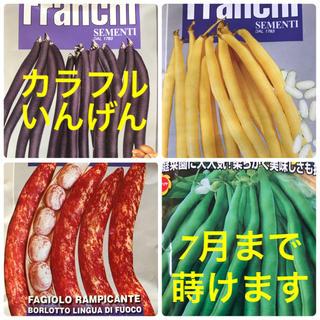 カラフル インゲン 種 (野菜)