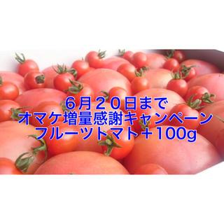 20日までオマケ増量❗️イチ押しの訳ありソムリエトマト5kg(20玉〜35玉) (野菜)