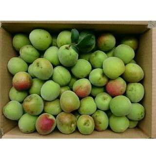 高知産梅3kg【南高梅】  低農薬・有機肥料のみで栽培