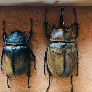 ギアスギアスゾウカブトWF2(虫類)