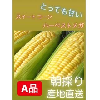 送料込み☆とうもろこし☆バーベストメガ(野菜)