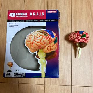 4D HUMAN ANATOMY BRAIN(模型/プラモデル)