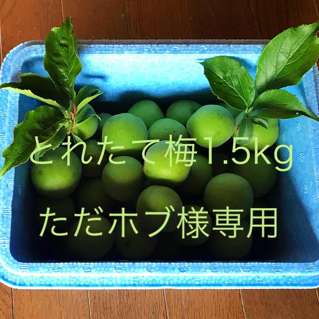 とれたて梅(ただホブ様専用) 食品/飲料/酒の食品(フルーツ)の商品写真