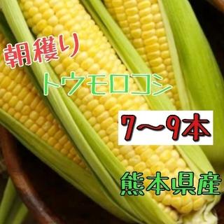 産地直送!とうもろこし(ゴールドラッシュ)熊本県産(野菜)