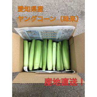 ヤングコーン 2kg 30本ぐらい(野菜)