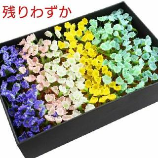 647)選べる6色 ソープフラワー シャボンフラワー かすみ草 花材 パーツ(その他)