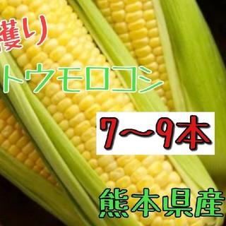 産地直送!とうもろこし(ゴールドラッシュ)熊本県産 (野菜)