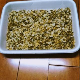 明日葉アシタバの種100粒とおまけ(野菜)