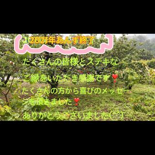 あんず 長野県森産 傷ありも含 6/14収穫開始  7/1収穫終了(フルーツ)