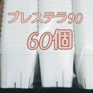プレステラ90 新品未使用 60個 多肉植物(プランター)