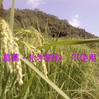🉐半額セール 玄米5kg旭一号(農薬・化学肥料不使用)(米/穀物)