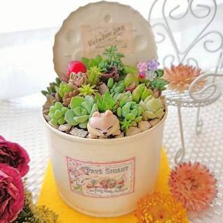 ◆多肉植物 お眠りわんこ(^ω^U)多肉の森 ミニGARDEN◎flower(その他)