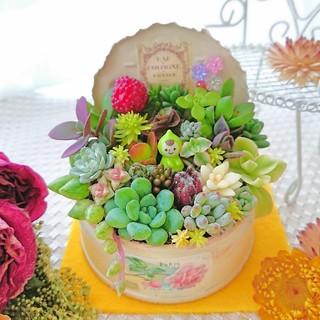 ◆多肉植物 小人の贅沢寄せ植え ミニGARDEN◎アンティーク×ローズラベル(その他)
