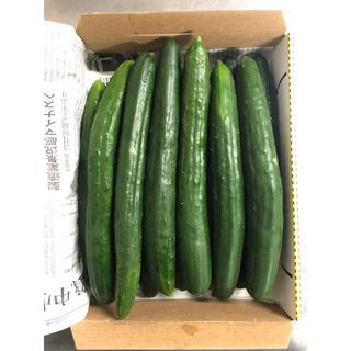 ち様専用 生グリーンライチ1kg&きゅうり約1.5kg(野菜)