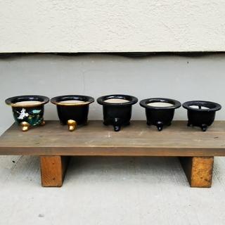 富貴蘭用 鉢 5個 セット(プランター)