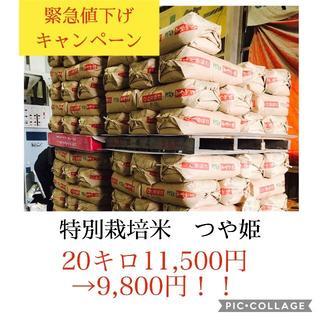 コロナ応援キャンペーン!!光り輝く大粒米✼宮城県特別栽培つや姫20キロ(米/穀物)