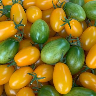 〈三須トマト農園〉アヒルの親分様専用(アイコ、グリーン、イエロー1.8kg)(野菜)