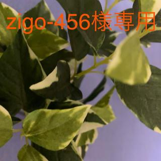 zigo-456様専用(ビタミン)