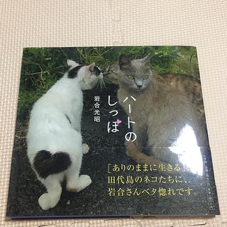 ショウガクカン(小学館)のハ-トのしっぽ 猫 岩合光昭 写真集 ネコ 猫島(趣味/スポーツ/実用)