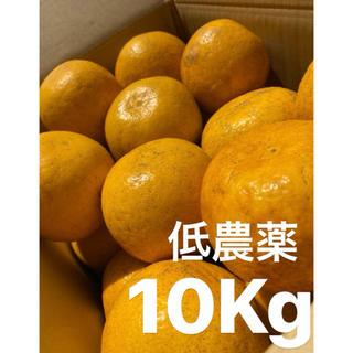 愛媛 低農薬 宇和ゴールド10Kg   美生柑 河内晩柑 みかん(フルーツ)