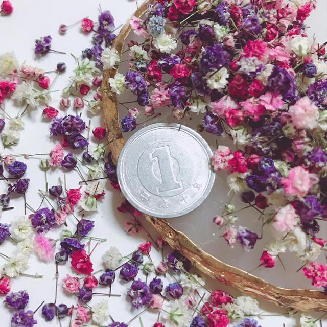 かすみ草 ドライフラワー 開きかけ蕾パープルピンク ハンドメイドのフラワー/ガーデン(ドライフラワー)の商品写真