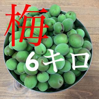 6キロ 群馬県産 生梅 B品サイズバラバラ 送料込!梅酒 梅ジュース 梅シロップ(フルーツ)